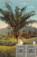 Panama - Ivory Nut Palm - Belle Oblitération - Panama