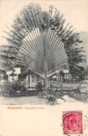 Singapour / Traveller's Tree - Singapore