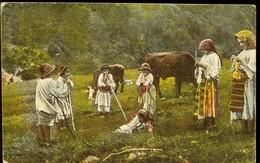 Postcard Romania, At Pasture, Cows, 1919, Publisher I. Saraga & S. Schwartz, Bucuresti, See Scans - Roumanie