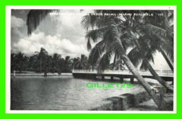 MIAMI BEACH, FL - VENETIAN WAY BRIDGE UNDER PLAMS - KROMEKOTE  POST CARDS - - Miami Beach