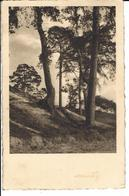 WARNETON (région Tournai - Mouscron) Voyagé Le 18/8/1938 Vers Ellezelles - Comines-Warneton - Komen-Waasten
