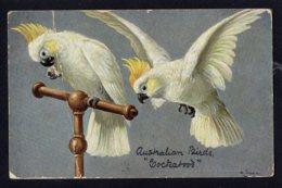 OCEANIE - AUSTRALIE - Australian Birds Cockatoos - Australie