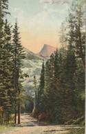 Aspen Avenue, In The Rocky Mountains, Near Banff, Alberta - Banff