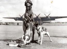 Australie Mascotte Du Lincoln Bombing Squadron Kangourou Et Chien Ancienne Photo 1952 - Guerre, Militaire