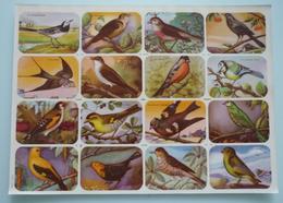 OISEAU16 Chromos / Images Scolaire School Bien Oiseaux Birds Planche 325 X 240 Mm Dos Blanc Papier Glacé - Autres