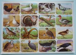 OISEAU 16 Chromos / Images Scolaire School Bien Oiseaux Birds Planche 325 X 240 Mm Dos Blanc Papier Glacé - Autres