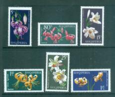 Albania 1970 Flowers, Lillies MUH Lot69698 - Albania