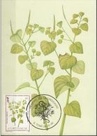 720 S. Tomé E Principe 1983 Medicinal Plants Maximum Card Piperonia Pallucila Piante Medicinali Maxi - Sao Tomé E Principe
