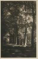 Liesbosch Bij Breda - Beukenlaan [AA35 6.867 - Zonder Classificatie