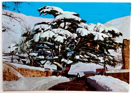 #652  Cedar Tree, Symbol Of  LABANON - Used Postcard Stamps - Arbres
