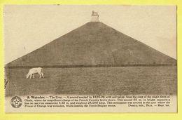 * Waterloo (Waals Brabant - Brabant Wallon) * (Desaix, Nr 9) Le Lion, Mound Erected In 1825, Vache, Cow, Koe, La Butte - Waterloo