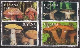 Flore - GUYANA - GUYANE - Champignons, Bolet, Russule - 1991 - Guyane (1966-...)