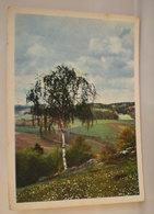 Albero Cartolina - Arbres
