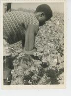 PHOTOS ORIGINALES - ANNÉES 60 - AFRIQUE - REPUBLIQUE CENTRAFRICAINE - La Récolte Du Coton - Afrique
