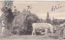 CPA (65) LOURDES Chargement De Foin Travaux Agricoles Agriculture Paysan Boeufs (2 Scans) - Agriculture