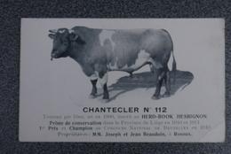 Rosoux 1910  Pk Cpa Cheval De Trait Trekpaard Chantecler Nr 112 Fotokaart - Berloz