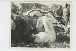 PHOTOS ORIGINALES - ANNÉES 60 - AFRIQUE - REPUBLIQUE CENTRAFRICAINE - Les Entrailles D'un Eléphant - Africa
