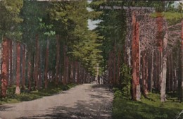 New York Saratoga Springs Hiltons Park The Pines 1913 - Saratoga Springs