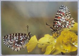 ZERYNTHIA RUMINA - OSTERLUZEIFALTER - ARLEQUIN - SPANISH FESTOON - Farfalla - Butterfly - Papillon - Mariposa -  Nv - Butterflies