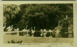 AUSTRALIA - FLAMINGO POND AT ADELAIDE ZOO SOUTH AUSTRALIA - REAL PHOTO SERIES 1841 - BY VALENTINE & SONS 1920s ( BG2445) - Adelaide
