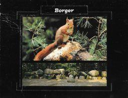 Borger-Odoorn - Een Eekhoorn (Ecureuil, A Squirrel) - Odoorn