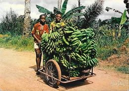 Lumières D'Afrique - Retour De La Bananeraie - Photo Alain Denis - Afrique
