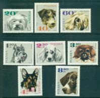 Poland 1969 Dogs MUH Lot35527 - 1944-.... Republic