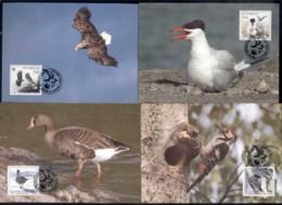 Sweden 1994 WWF Birds Of Sweden Maxicards - Sweden