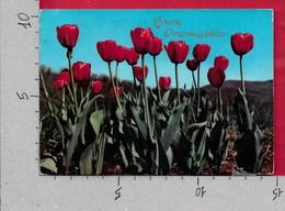 CARTOLINA VG ITALIA - FIORI - Tulipani Rossi - Buon Onomastico - ROTALFOTO R155 - 10 X 15 - ANN. 1969 - Fiori
