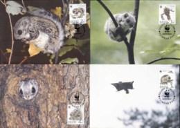 Estonia 1994 WWF European Flying Squirrel Maxicards - Estonia