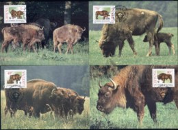 Lithuania 1996 WWF European Bison Maxicards - Lithuania