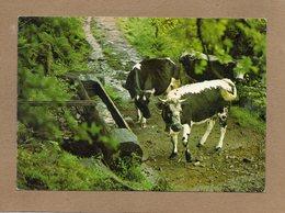 CPSM - Environs De MASEVAUX (68) - Aspect De L'abreuvoir De La Ferme-Auberge De Bruckenwald De Mr Iltis - Années 70 - Masevaux