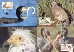 Gibraltar 1991 WWF Birds Of Gibraltar Maxicards - Gibraltar