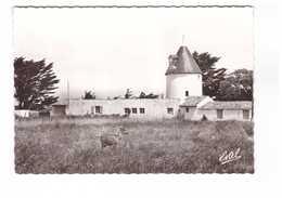 17 Ile De Ré Le Morinand Vieux Moulin CPSM GF Edit Estel N°203 - Ile De Ré
