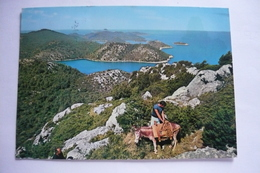 2 Postcards With Donkeys, Us. 1971 - Burros