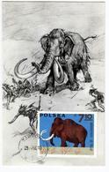 Carte Maximum MAMMOUTH  (mammuthus) - Preistorici