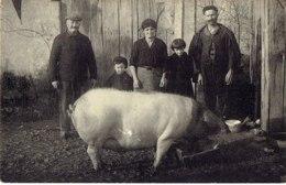 Cpa  Corrèze Au Nord De Neuvic, Famille D'agriculteurs Avec Cochon. - Agriculture