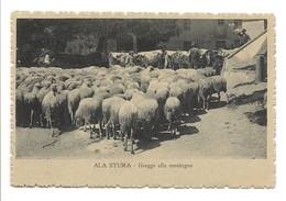 ALA DI STURA  - GREGGE ALLA MONTAGNA - Unclassified
