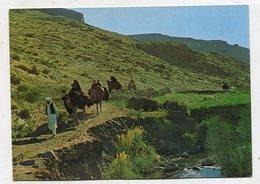 AFGHANISTAN  - AK 343188 Kuchi Caravan - Afghanistan