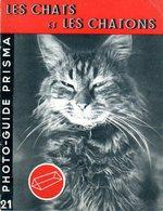 Photographie : Prisma N° 21 : Les Chats Et Les Chatons Par Philip Johnson - Photographie
