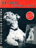 Photographie : Prisma N° 22 : Les Chiens Grands Et Petits Par Philip Johnson - Photographie