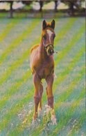 New York Saratoga Aqueduct Belmont Park Thouroughbred Foal Horse Racing - Saratoga Springs