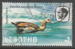 Lesotho. 1981 Birds. 2m Used. SG 449 - Lesotho (1966-...)