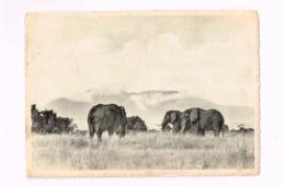 Eléphants Kashwa,plaine Du Lac Edouard.Expédié De Costermansville à Cerfontaine.(Erreur De Dateur:1962 Au Lieu De 1952) - Congo Belge - Autres