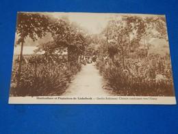 LINKEBEEK  -  Horticulture Et Pépinières De Linkebeek  - Chemin Conduisant Vers L'Etang - Jardin Robinson - Linkebeek
