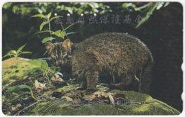 JAPAN I-731 Magnetic NTT [110-699] - Animal, Wild Cat - Used - Japan
