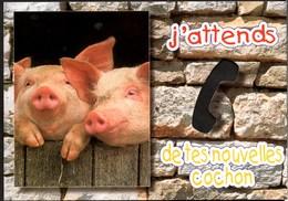 **J'attends De Tes Nouvelles Cochon** Carte à Trou NEUVE Edit Images Du Midi - Cochons
