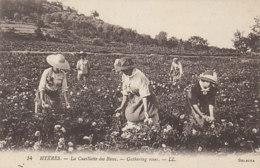 Hyeres La Cueillette Des Roses (LOT AE21) - Artisanat
