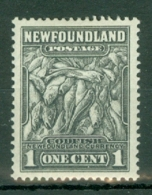 Newfoundland: 1932/38   Pictorial  SG222     1c      MH - Neufundland