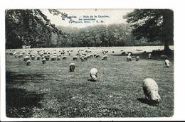CPA - Carte Postale -BELGIQUE - Bruxelles -Bois De La Cambre -Les Moutons-1907  VM541 - Bossen, Parken, Tuinen